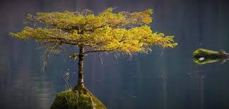 the tree on the lake port renfrew canada atlas obscura