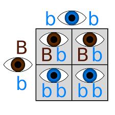 gene expression biology visionlearning