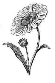 black and grey daisy flower tattoo design