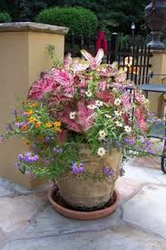 put this in the front yard filled with snapdragons barrel planter
