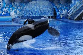 Sea World Orlando Map by File Seaworld Orlando Shamu 1530 Jpg Wikimedia Commons