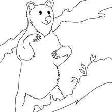 forest animals coloring pages 37 wild animals