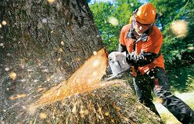 5 signs of a dull saw chain stihl