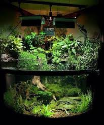 Aquascape Store Aqua Terrarium Shop Plantston Plants Ton Garden Pinterest