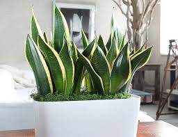 15 best houseplants for beginners balcony garden web
