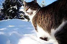 winter simple the free encyclopedia