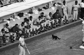 Picture Of Black And White by How A Billy Goat U201ccursed U201d The Chicago Cubs History In The Headlines