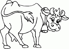 cattle coloring pages coloring home
