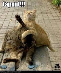 Mma Meme - mma cats meme by lando228 memedroid