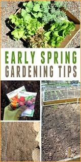 pacific northwest gardening tips pacific northwest vegetable