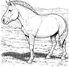 print u0026 download free coloring pages of horses
