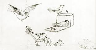 pablo picasso pigeons 1890