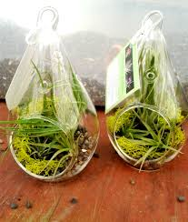 creative idea awesome clear glass pears air plants display cute