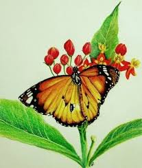sketches of nature wallpapers sketches nature butterfly birds