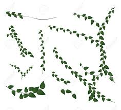 920 climbing plant stock vector illustration and royalty free