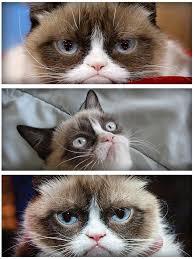 Happy Cat Meme - grumpy cat meme latest fun ny fat and happy cats photo bombs