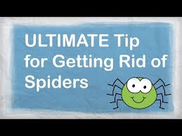 How To Keep Spiders Out Of Your Bed How To Get Rid Of Spiders In The House 11 Steps With Pictures