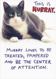 this is the birthday card murray humorous cat birthday card by recycled paper greetings