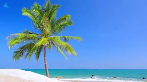 paradise beach on tropical island beach view u0026 ocean