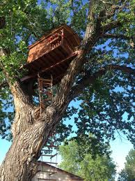 i built this treehouse for my daughter album on imgur