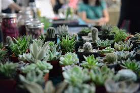 plant pictures of succulent terrariums
