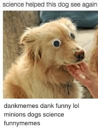 This Is Dog Meme - this dog meme dog best of the funny meme