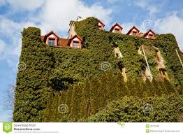 overgrown house royalty free stock photo image 30167355