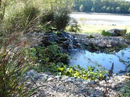 baltimore backyard pond cecil county waterfalls
