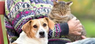 Pet Subscribe To Petful U0027s Free Pet Food Recall Alerts