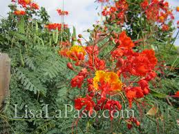 native texas landscaping plants super drought tolerant plants for central texas lisa u0027s landscape