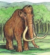 link mammoth mammoth