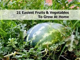 best vegetables for home garden best idea garden