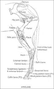 Anatomy Of The Calcaneus 25 Best Anatomy Of The Knee Ideas On Pinterest What Does Bum