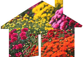 Flowers Bristol Tn - what do autumn flowers have to do with real estate bristol all