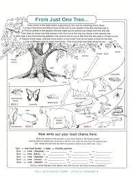 decomposers worksheets for kids archbold biological station