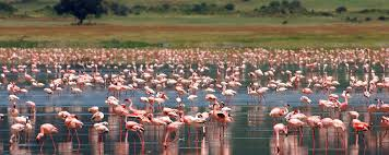 3 days tarangire ngorongoro manyara u2013 mwema africa safari