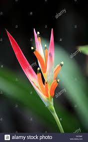 Beautiful Plants by Beautiful Plants In Sri Lanka Asia Stock Photo Royalty Free Image