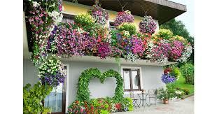 balkon grã npflanzen gartenwelt emsbüren balkonpflanzen für jede jahreszeit