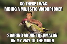 Weasel Meme - hilarious memes of the weasel riding the woodpecker 22 pics