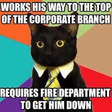 Career Meme - workplace lulz when your career is one big cat meme