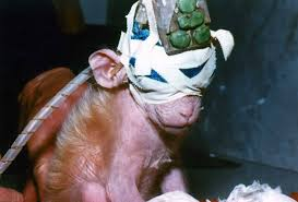 Example Of Argumentative Essay On Animal Testing Top Five Reasons To Stop Animal Testing Peta