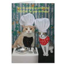 funny cats image greeting cards zazzle com au