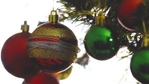 red bulb hanging on christmas tree branches with white background