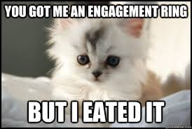 Cute Kitty Meme - you got me an engagement ring but i eated it cute kitten quickmeme
