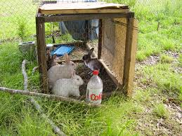 Air Conditioned Rabbit Hutch Keeping Rabbits Cool In Weather Livethecountrydream