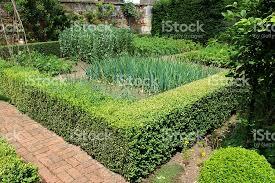 ornamental vegetable garden image walled kitchen garden box buxus