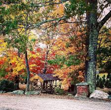 s tree farm home
