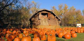 Why Fall Is The Best Season Top 10 Reasons Why Fall Is The Best Season