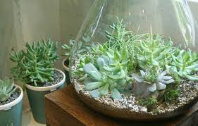 sweet peach home terrarium how to