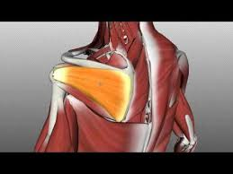 Rotator Cuff Injury From Bench Press Best 25 Shoulder Injuries Ideas On Pinterest Physical Therapy
